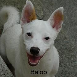 baloo...