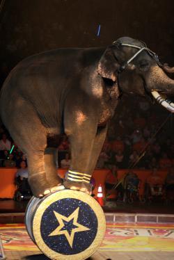 elefante1237924399