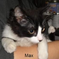 max-min-264x300.