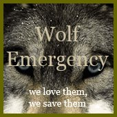 wolf_emergency